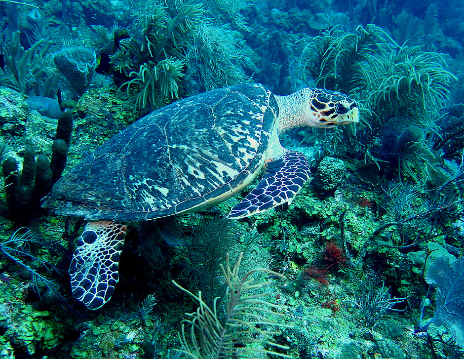 In-Water Sea Turtle Monitoring Program